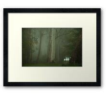 Mistical - Mount Wilson, NSW Australia Framed Print