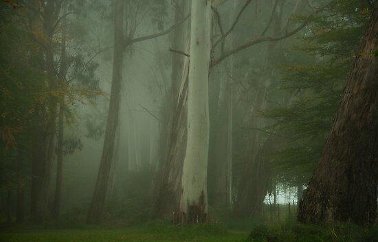 Mistical - Mount Wilson, NSW Australia by Philip Johnson