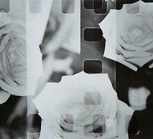 Rose Film by MsSLeboeuf
