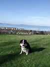 Laddie at Penmaen Park by Michael Haslam