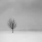 Solitude 2012 by redtree