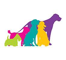 Dog Silhouettes Colour Photographic Print