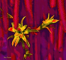 On Thorns on Flowers ... על קוצים.... ועל פרחים by Nira Dabush