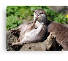 Playful Otters. Canvas Print
