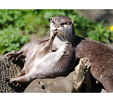 Playful Otters. Photographic Print