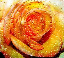 Lone Rose © by Dawn M. Becker