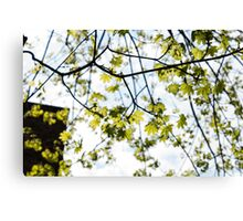 Leaves in the City Canvas Print