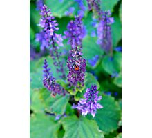 Complements and Mutualism  Photographic Print