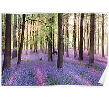 Morning Bluebells Cropped Poster