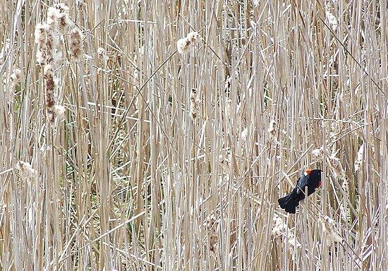 Bye, Bye Blackbird by Monnie Ryan
