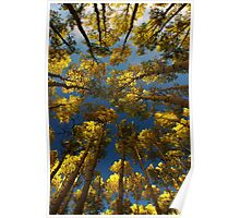 To Lie Under the Aspens in Fall Poster