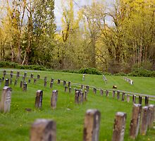 Rows of Rememberance  by capturedbykt