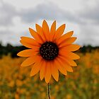PhotoSyntheSunflower by WhiteLightPhoto