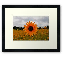 PhotoSyntheSunflower Framed Print