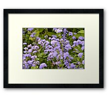 In the lovely violet fields we daydreamed and watched the clouds go by Framed Print