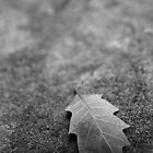 Leaf on Rock by WhiteLightPhoto