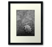Leaf on Rock Framed Print