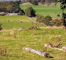 Rural Scene, Tasmania, Australia by fotosic