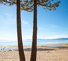 Pine trees on the sand overlooking Lake Tahoe by Jess Gibbs