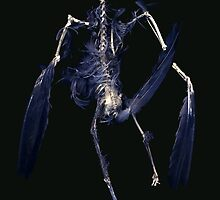 Crow Skeleton by merrywrath