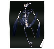 Crow Skeleton Poster