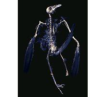 Crow Skeleton Photographic Print