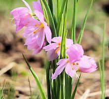 Grass Widow's Bouquet by Betty  Town Duncan
