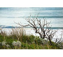 Ocean swell beyond the foreshore Photographic Print