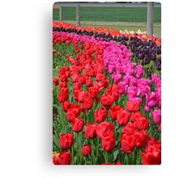 Tulip Fields 2 Canvas Print