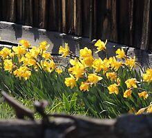 Springtime in Whitney by BettyEDuncan