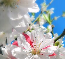 Peppermint Peach Bloom by Sharon Woerner