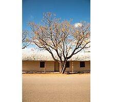 Tree with falling leaves outside stone cottage Photographic Print