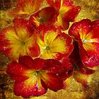 1414-red spring flowers by elvira1