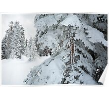 Frosty snow covers trees Poster