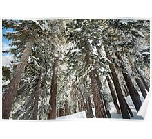 Fresh snow glistens in the forest Poster