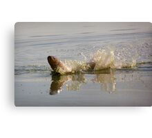 jump out of water Canvas Print