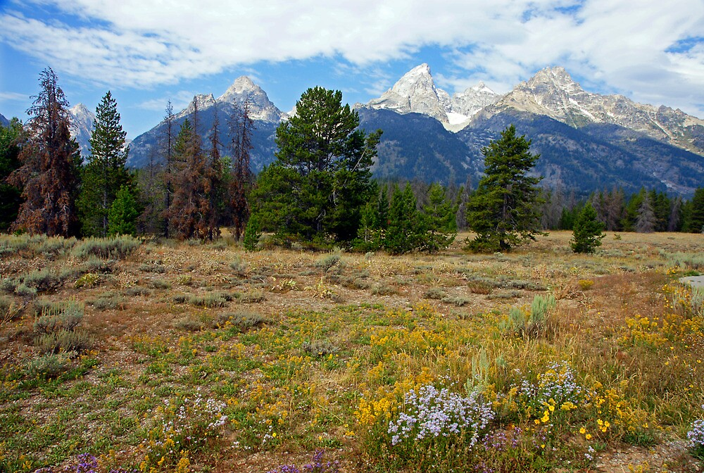 Teton Titans by Harry Oldmeadow