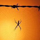 Spider at Sunrise by Alex Ford