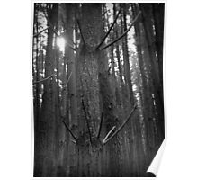 Scary Tree- Mount George Pine Forest Poster