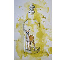 Bottled Fawn Photographic Print