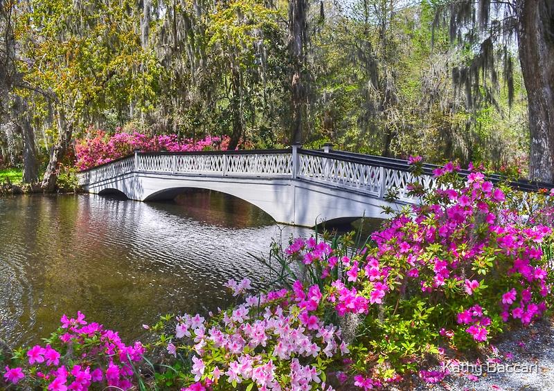 The Bridge At Magnolia Plantation by Kathy Baccari
