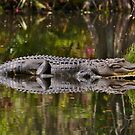 Big Gator Reflection by Kathy Baccari