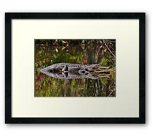 Big Gator Reflection Framed Print