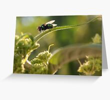 Garden Visitor  Greeting Card