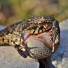The Snake And The Toad by Kathy Baccari
