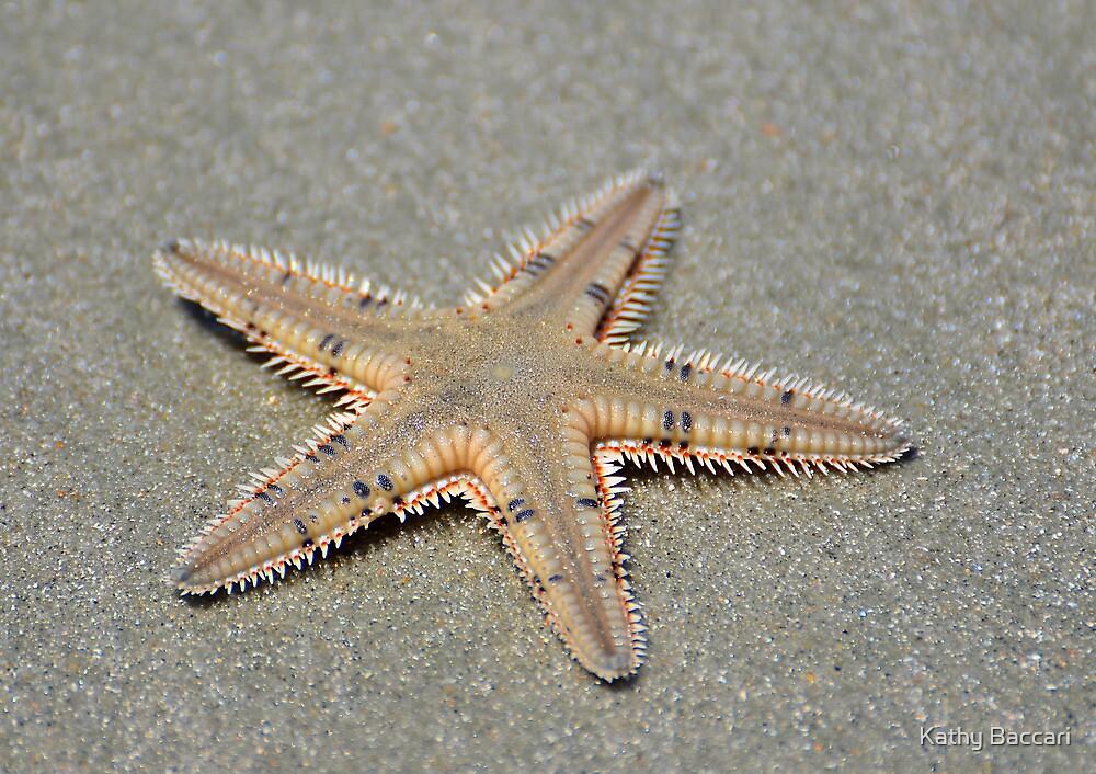 Spikey Seastar by Kathy Baccari