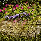 Garden Flower Planter by mlphoto