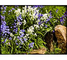 English Country garden Photographic Print