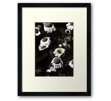 Michaelmas Daisies (Gerbera) Framed Print