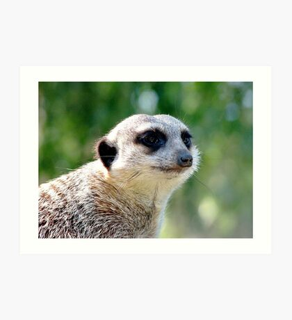Suricate on a watch Art Print